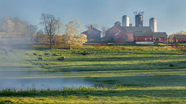 Cow Poster featuring the photograph Foggy Farm Morning by Bill Wakeley