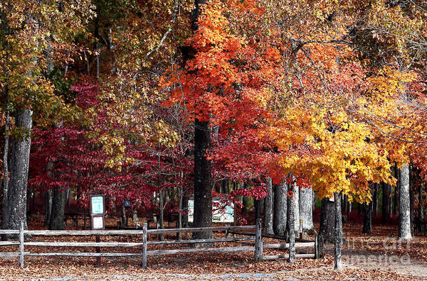 Foliage Colors Poster featuring the photograph Foliage Colors by John Rizzuto