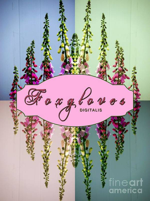 Foxgloves Poster featuring the photograph Foxgloves Times 4 by Margaret Newcomb