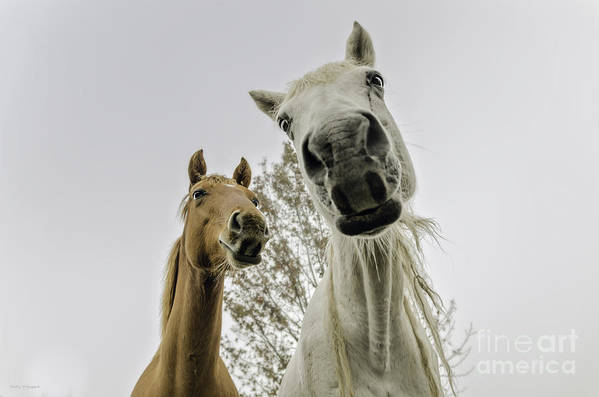 Nature Poster featuring the photograph Funny Horses by Cindy Bryant