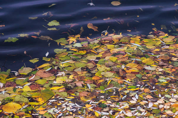 Autumn Poster featuring the photograph Gone With The Water by Alexander Senin