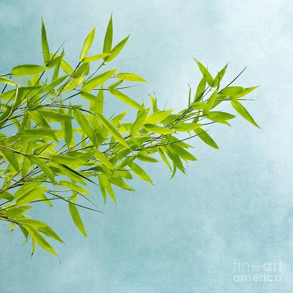 Bamboo Poster featuring the photograph Green Bamboo by Priska Wettstein