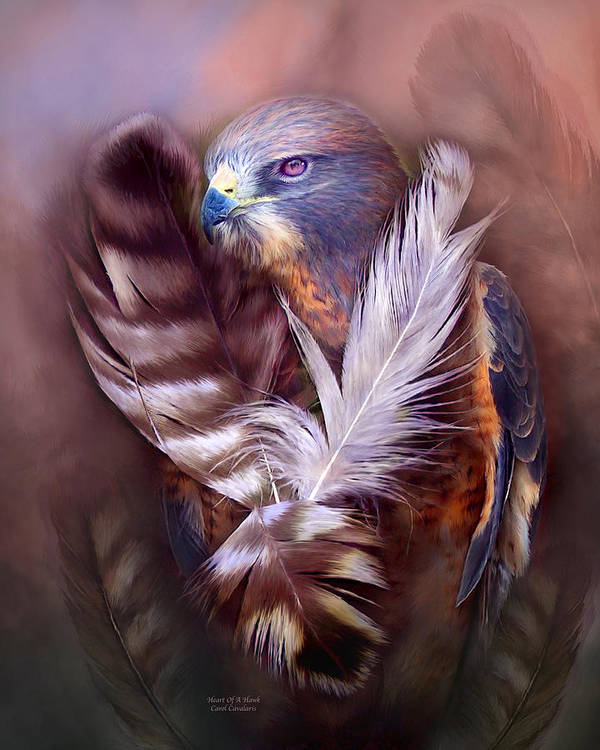 Hawk Poster featuring the mixed media Heart Of A Hawk by Carol Cavalaris