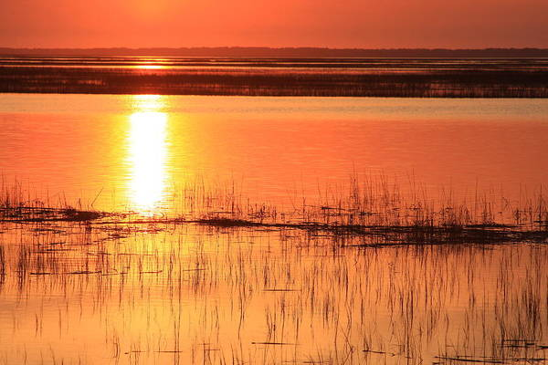 Hunting Island Poster featuring the photograph Hunting Island Tidal Marsh by Michael Weeks