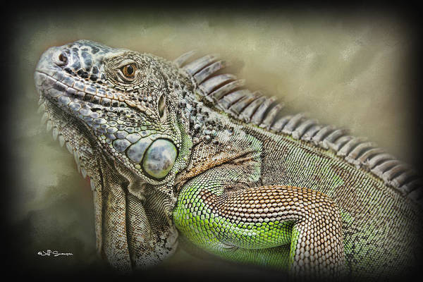 Lizard Poster featuring the photograph Iguana Named Mack by Jeff Swanson