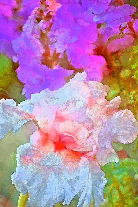 Floral Poster featuring the photograph Iris 60 by Pamela Cooper
