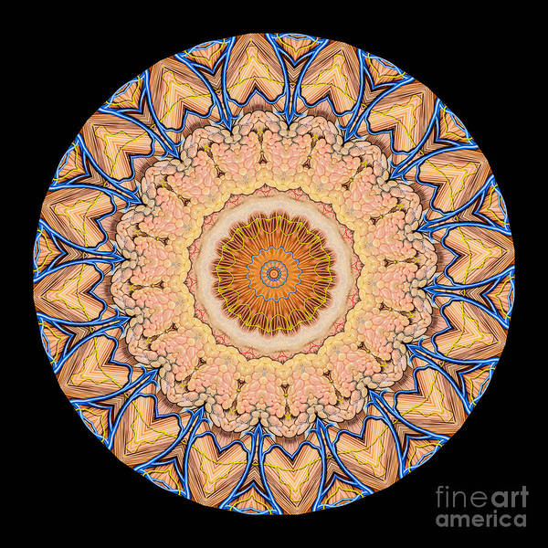 Abstract Poster featuring the photograph Kaleidoscope Anatomical Illustrations Seriesi by Amy Cicconi