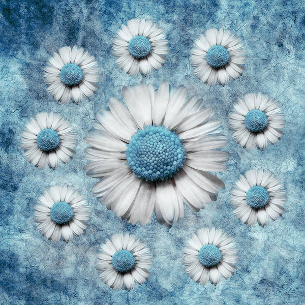 turquoise Art Poster featuring the digital art La Ronde Des Marguerites - Blue V02 by Variance Collections