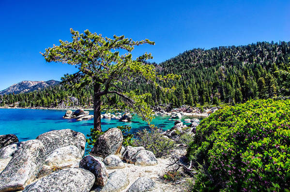 Blue Sky Poster featuring the photograph Lake Tahoe Bonsai Tree by Scott McGuire