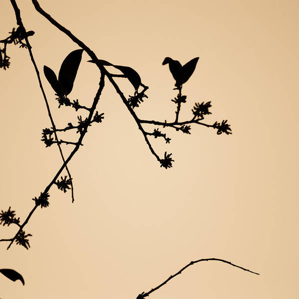 Art Poster featuring the photograph Leaf Birds by Darryl Dalton