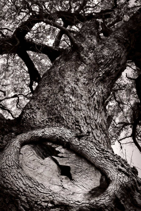 Tree Poster featuring the photograph Lightning Tree by Trish Mistric