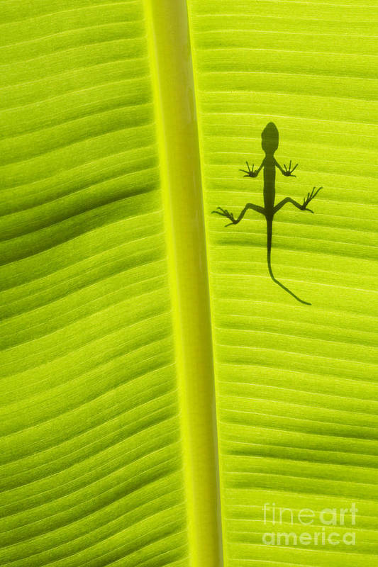 Lizard Poster featuring the photograph Lizard Leaf by Tim Gainey