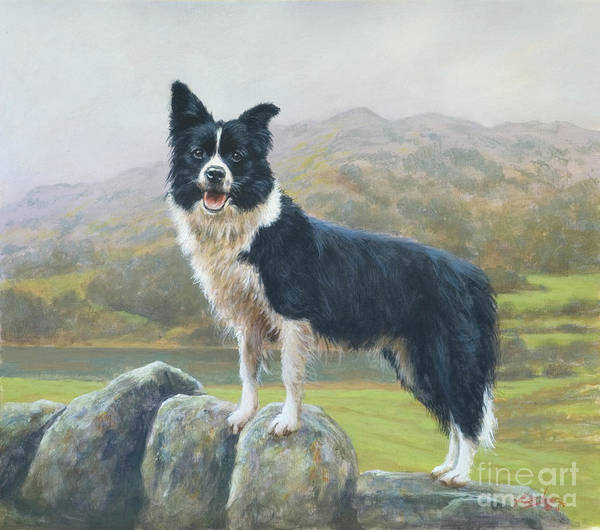 Dog Paintings Poster featuring the painting Lookout by John Silver
