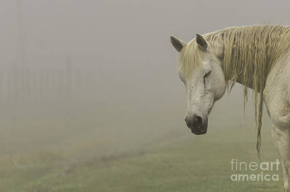 Nature Poster featuring the photograph Magical White Horse by Cindy Bryant
