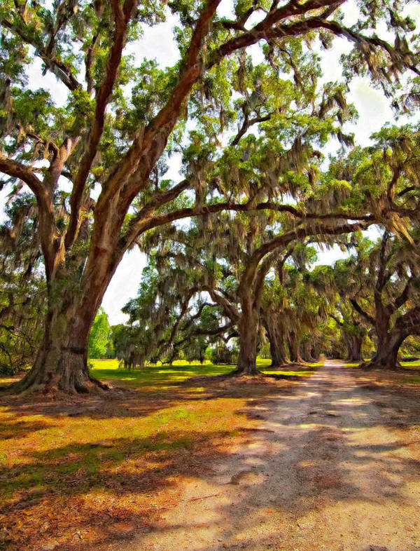 Evergreen Plantation Poster featuring the photograph Memory Lane Oil by Steve Harrington