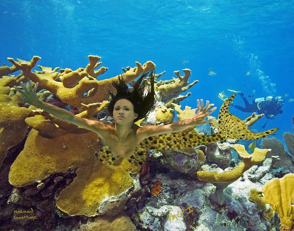 Mermaid Poster featuring the photograph Mermaid Camoflauge by Paula Porterfield-Izzo