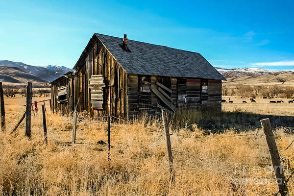 Barn Poster featuring the photograph Old And Forgotten by Robert Bales