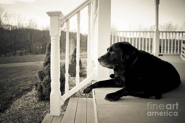 Dog Poster featuring the photograph Old Dog On A Front Porch by Diane Diederich