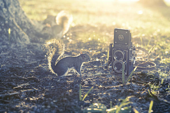 Er Squirrel Camera Nature Lover Vintage Park Humor Sunlit Sunlight Photo Art Funny Film Style Twin Lens Sawyer Mark Iv Laura Fasulo Laurarama Woodland Scene Fairy Tale Story Book Tree Grass Soil Glow Glowing Sun Light Sunny Spring Summer Summery Gift For Child Children Photographer Animal Lover Er Whimsy Whimsical Fluffy Tails Photo Art Somewhere Poster featuring the photograph Old School by Laura Fasulo