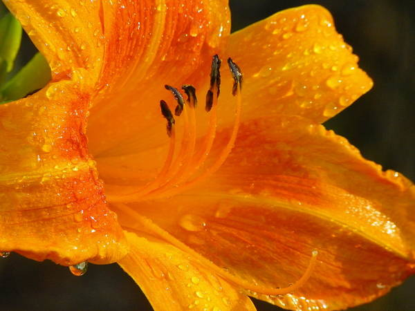 Orange Poster featuring the photograph Orange Rain by Karen Wiles