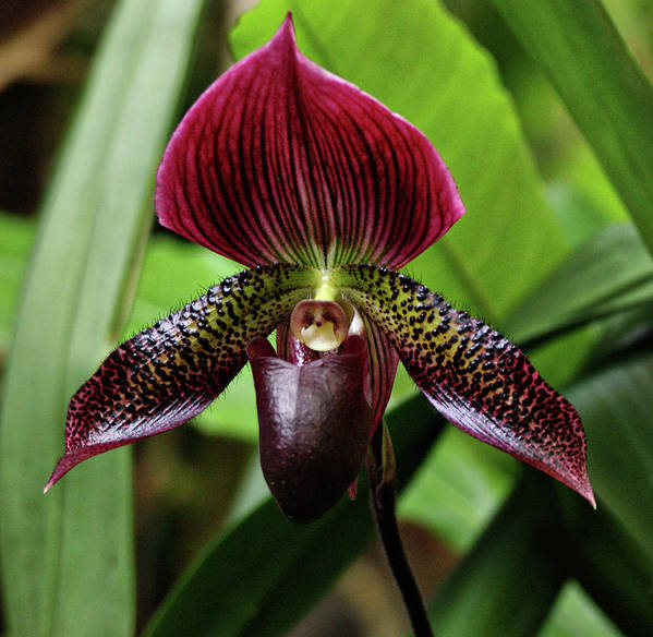 Orchid Poster featuring the photograph Orchid by Sandy Keeton