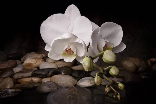 Arrangement Poster featuring the photograph Orchid - Sensuous Virtue by Tom Mc Nemar