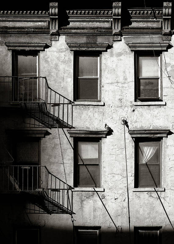 New York Poster featuring the photograph Pigeon by Dave Bowman