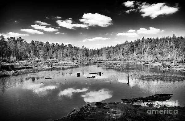 Pine Barrens Lake Poster featuring the photograph Pine Barrens Lake by John Rizzuto