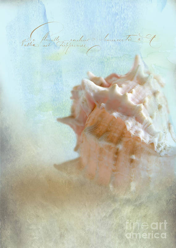 Sea Shell Poster featuring the photograph Pink Murex Seashell by Betty LaRue