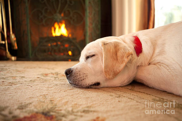 Puppy Poster featuring the photograph Puppy Sleeping By A Fireplace by Diane Diederich