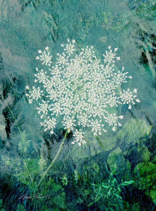 Flower Poster featuring the digital art Queen Anne's Lace by Ann Powell