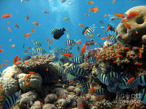 Sea Life Poster featuring the photograph Sea Life by Boon Mee