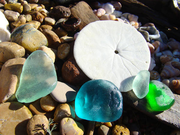 Sand Dollar Poster featuring the photograph Seaglass Art Prints Rock Garden Sand Dollar by Baslee Troutman