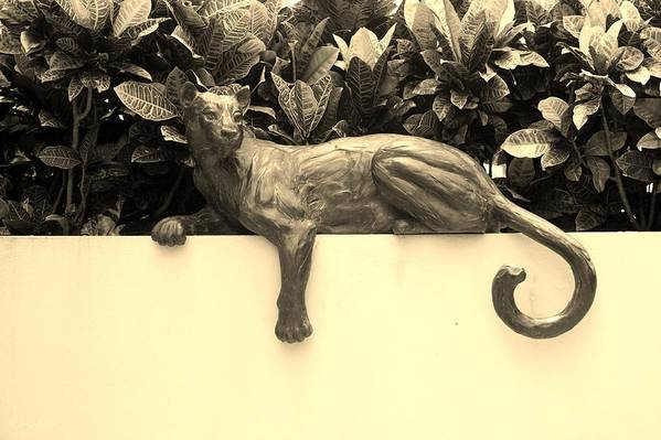 Cat Poster featuring the photograph Sepia Cat by Rob Hans