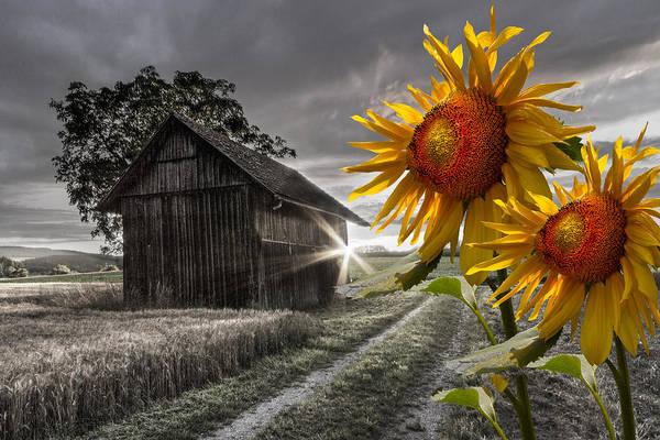 Sunflower Watch Poster by Debra and Dave Vanderlaan
