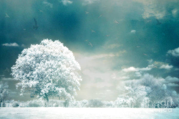 Dreamy Fine Art Nature Photos Poster featuring the photograph Surreal Dreamy Infrared Teal Turquoise Aqua Nature Tree Lanscape by Kathy Fornal