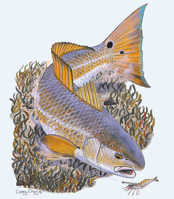 Redfish Poster featuring the painting Tailing Redfish by Carey Chen