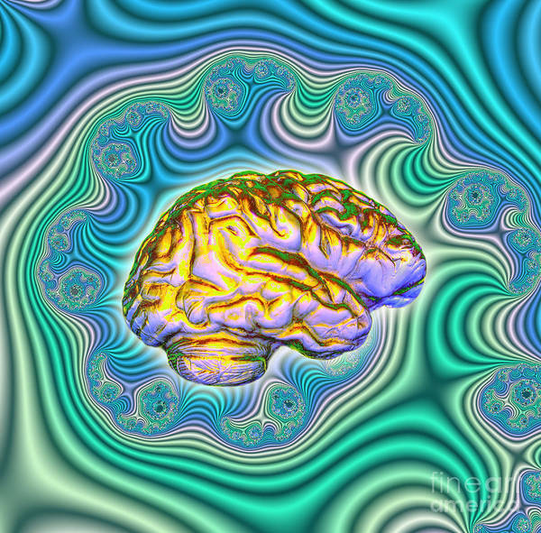 Brain Poster featuring the photograph The Brain by Dennis D. Potokar