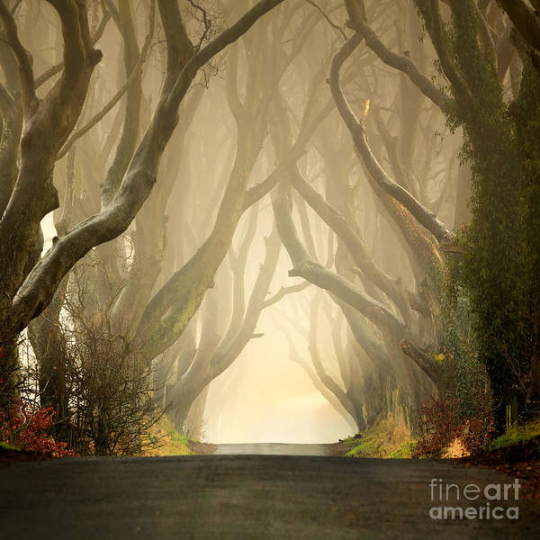 Beech Poster featuring the photograph The Dark Hedges 2011 by Pawel Klarecki