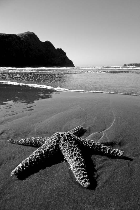 Starfish Poster featuring the photograph The Starfish by Peter Tellone