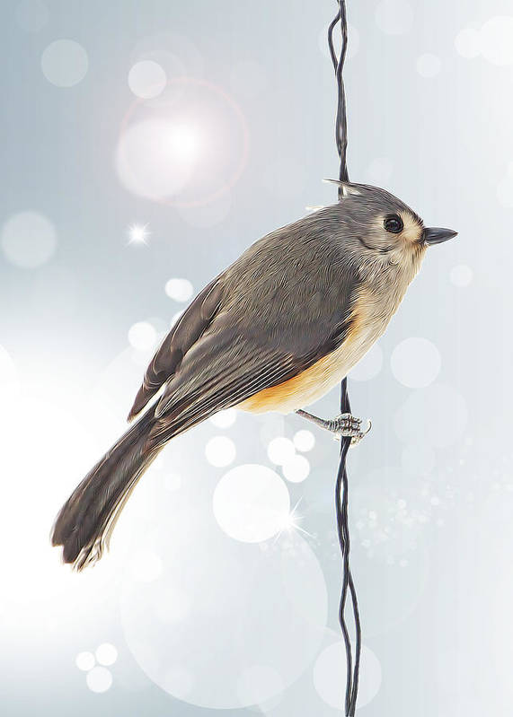 Tufted Titmouse Poster featuring the photograph Tufted Titmouse Twinkle by Bill Tiepelman