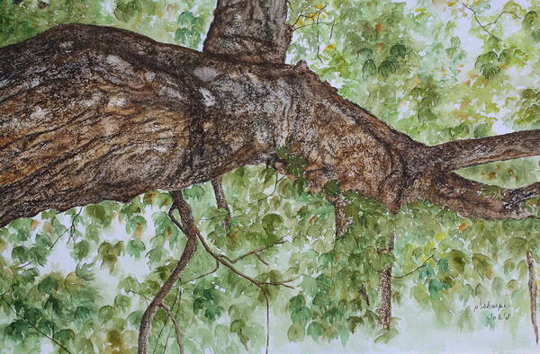 Nature Poster featuring the painting Twisted Maple by Patsy Sharpe