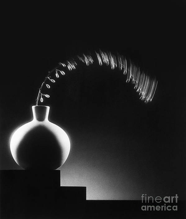 Still Poster featuring the photograph Vase And Berries by Tony Cordoza