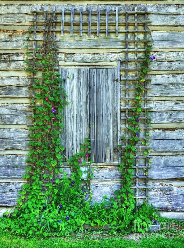 Vines Of Metamora Poster featuring the photograph Vines Of Metamora by Mel Steinhauer