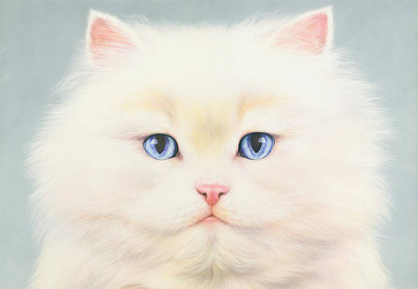 Andrew Farley Poster featuring the photograph White Persian by Andrew Farley