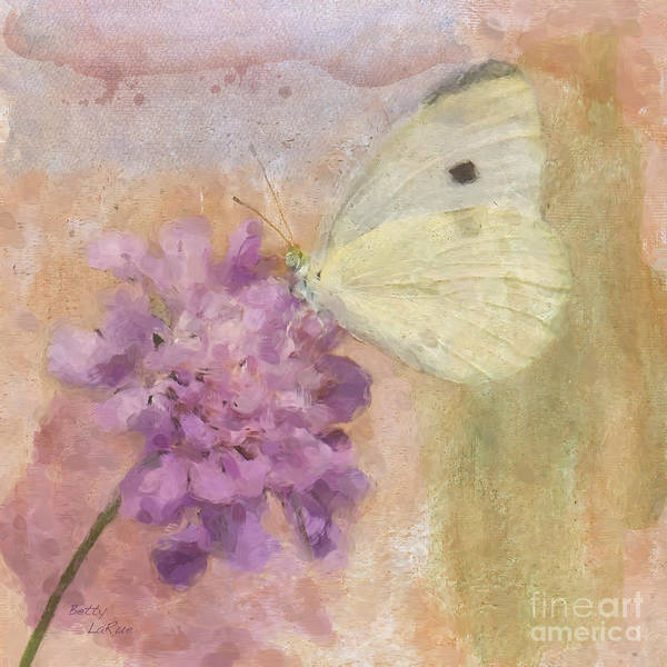 Cabbage White Butterflies Poster featuring the photograph Wings Of Beauty by Betty LaRue