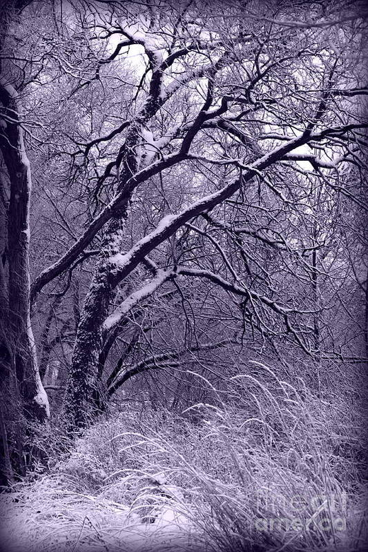 Winter Poster featuring the photograph Winter In Purple by Carol Groenen