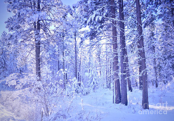 Winter Poster featuring the photograph Winter Solace by Tara Turner