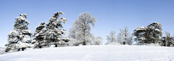 Oak Tree Poster featuring the photograph Winter Tree Line by Tim Gainey