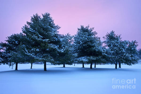 Snow Covered Poster featuring the photograph Winter Trees by Brian Jannsen